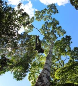 Rene climbing tree