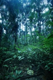 Boa in swamp